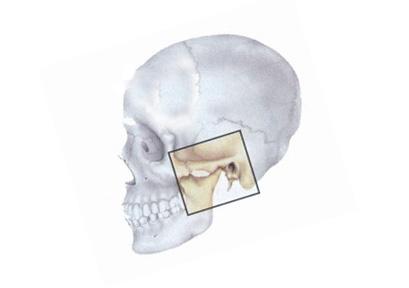Где можно сделать рентген челюстного сустава медицинская закрутка на локтевой сустав