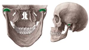 Изображение - Рентген височно челюстного сустава 623367c7f9c2822cf8fbb2b361dfdc5e